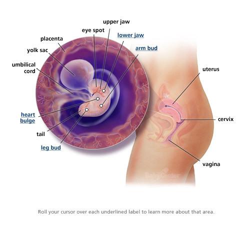träningsvärk i övre delen av magen gravid